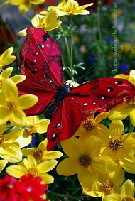 Beautiful Butterfly Red Flower