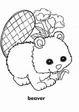 Beaver Coloring Pages Dam Beavers Colouring Template Cartoon Templates sketch template