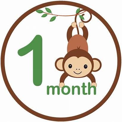 Monkey Sticker Shower Iron Monthly Boy Clip