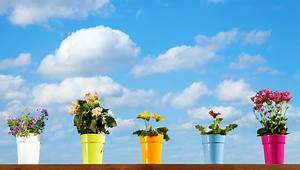 Zimmerpflanzen Die Direkte Sonne Vertragen : zimmerpflanzen an die sonne urban farmer ~ Markanthonyermac.com Haus und Dekorationen