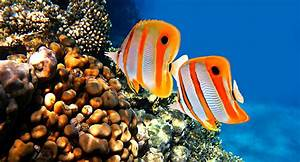 GULATI FISH AQUARIUM & PET SHOP: MARINE FISH  Aquatic
