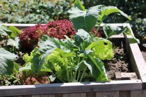 Kleiner Gemüsegarten Anlegen : gem segarten anlegen gestaltung ~ Pilothousefishingboats.com Haus und Dekorationen