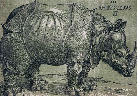 rhinoceros drawing  albrecht durer