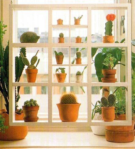 plant window shelves window shelves for plants shelves to house trailing plants like columnea piggyback plant