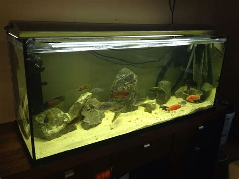 4ft and 3ft aquarium fish tanks for sale cheap manchester greater manchester pets4homes