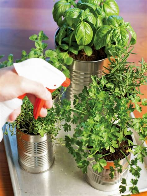 tin cans  kitchen countertop herb garden  gardens