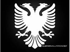 White and Black Albanian Eagle