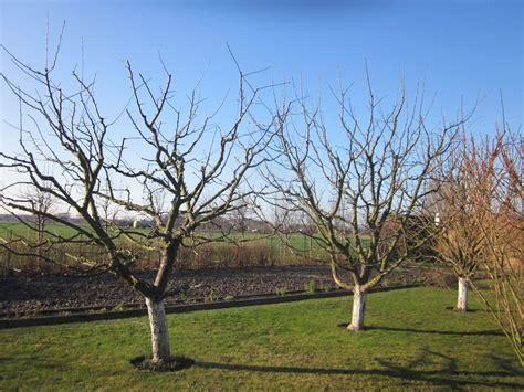 Garten Und Landschaftsbau Usedom by Pflanzen Kaufen Baumpflege Und Geh 246 Lzschnitt Baumschule