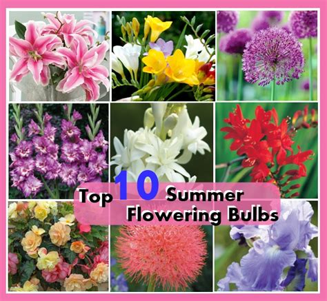 top 10 summer flowering bulbs diy cozy home world home