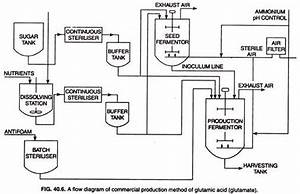 Glutamic Acid  History  Production And Uses  With Diagram