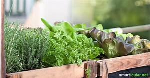 7 tipps fur den effizienten balkongartn gemuse obst und With markise balkon mit tapeten mit obst und gemüse