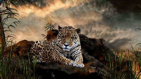 Beautiful Animals Wallpapers For Desktop - jaguar animal wallpapers jaguar pictures images 1080p