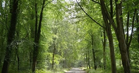 Walking in the country: Savernake Forest