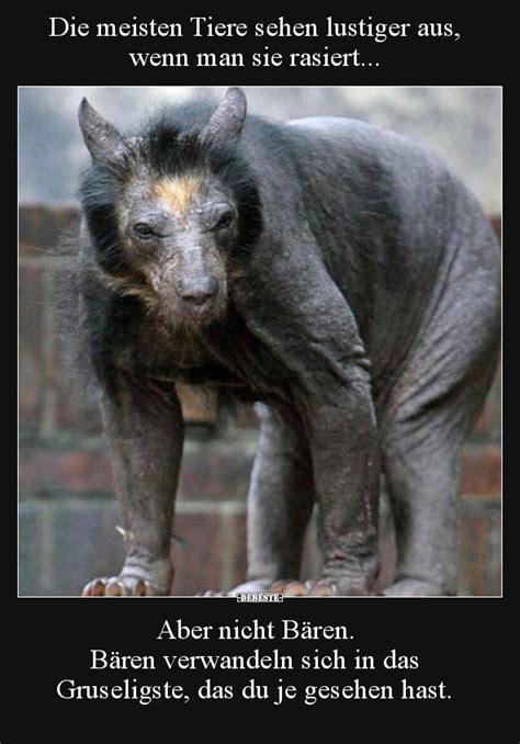 die meisten tiere sehen lustiger aus wenn man sie