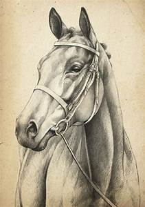 horse head drawing … | Pinteres…