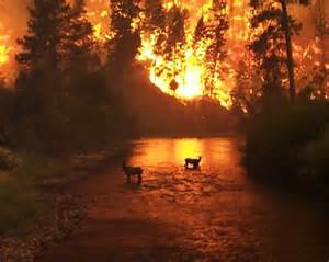 Wild Forest Fires in Montana