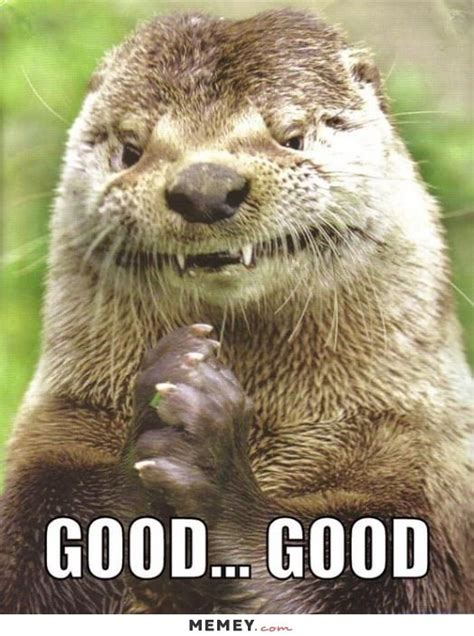 Funny Otter Meme - 25 best ideas about otters funny on pinterest otters baby sea otters and baby otters