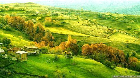 Green wallpaper ireland