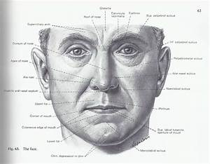 Cheek Bone Anatomy Cheek Anatomy Diagram Human Anatomy