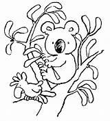 Koala Coloring Pages Bear Printable Cute Dessin Australia sketch template