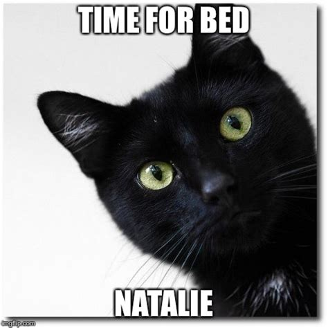 Black Cat Memes - black cats matter imgflip