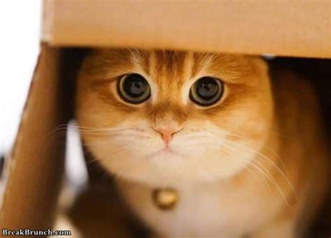 cute cat  huge eyes  pics breakbrunch