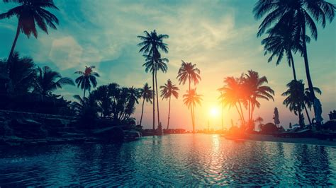 wallpaper sunset palm trees tropical beach hd nature