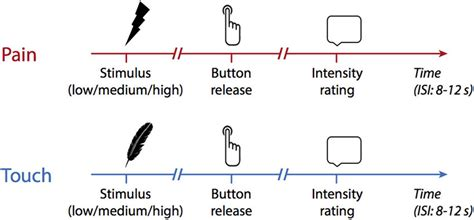 Paradigm. Pain and touch stimuli of varying intensity were applied to...   Download Scientific ...