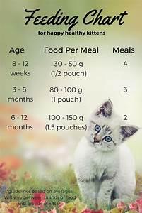 Newborn Chart Development Feeding Your Kitten Feeding Kittens Kitten Food Kittens