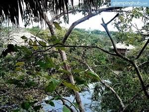 Brazil Amazon Rainforest Tree House