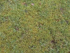 Moos Im Rasen : gutes klima mit moos sylvia haendschke ~ Lizthompson.info Haus und Dekorationen