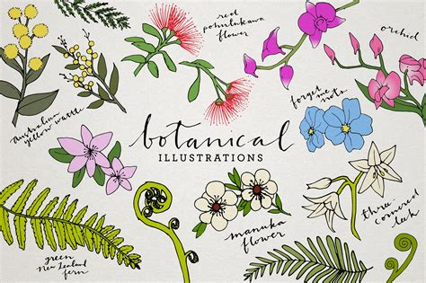 clipart illustrations botanical floral illustration pack illustrations