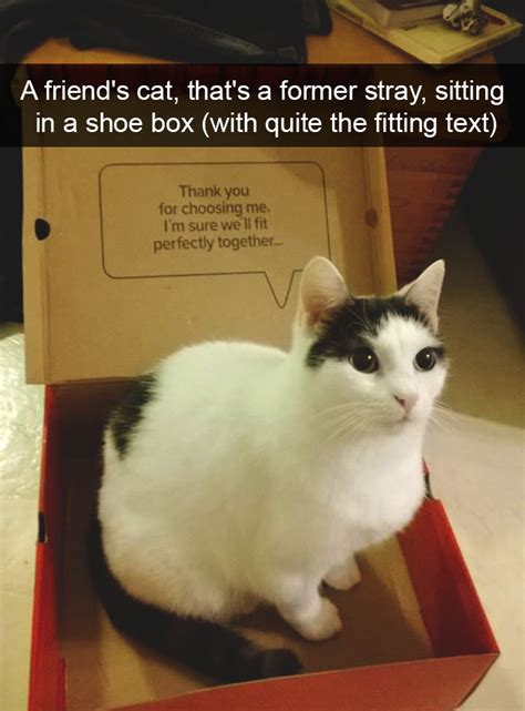 Hilarious Images 10 Hilarious Cat Snapchats That Are Im Paw Sible Not To