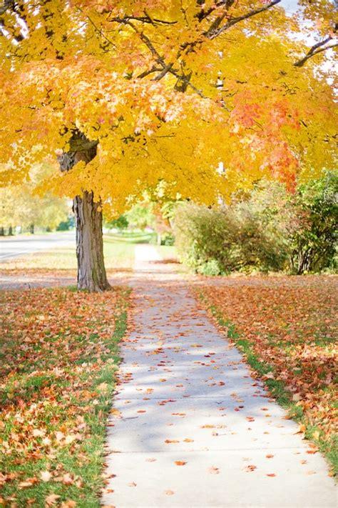 photo sidewalk yellow tree walkway  image