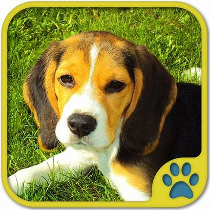 Dog Games Apps Beagles Dogs Doggy Barking