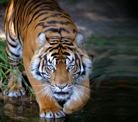 Animal Planet Wallpaper - animal planet wallpaper wallpapersafari