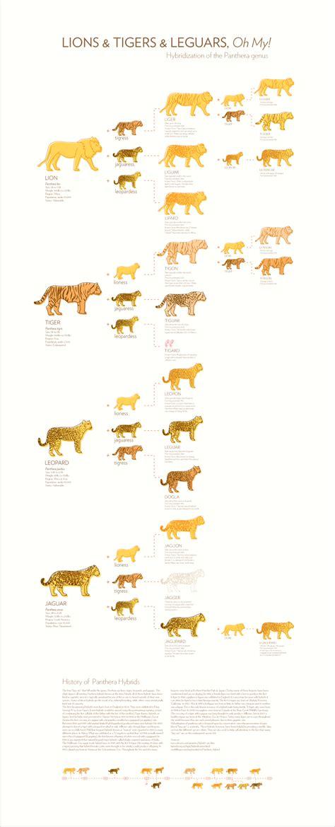 Lions & Tigers & Leguars, Oh My! - amberlcox