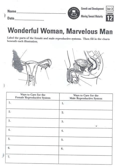 male reproductive system labeling worksheet printable