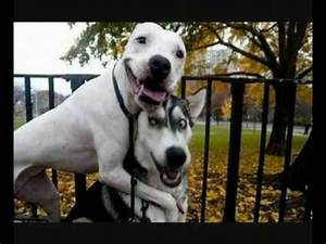 WORLD'S FUNNIEST DOGS PART 1 - YouTube