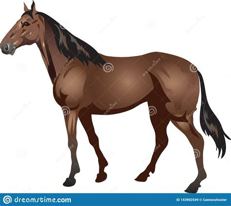 horse thoroughbred odd toed vector stalion galop animal ungulate
