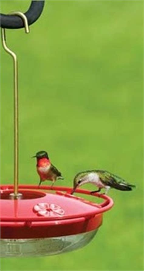 birds unlimited hummingbird feeder birds unlimited the best hummingbird feeders
