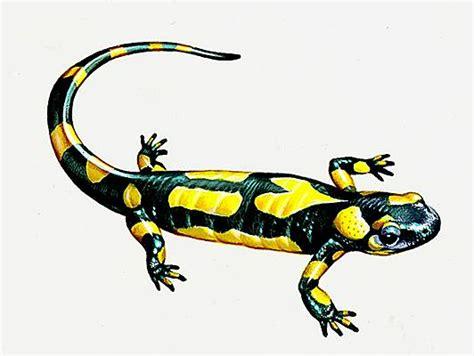 cuisine des legumes encyclopédie larousse en ligne salamandre
