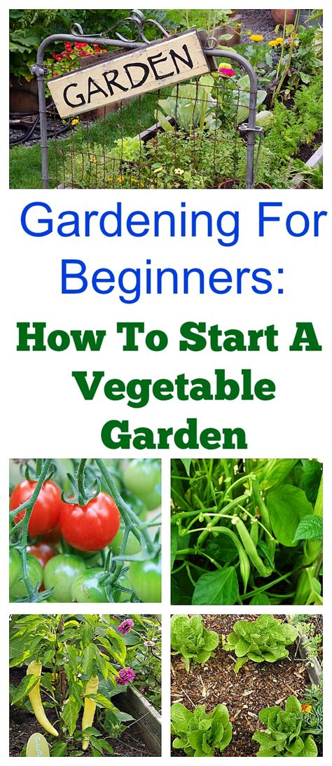 how to start a garden how to start a vegetable garden