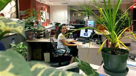 plante verte bureau les bienfaits des plantes vertes au travail ici radio