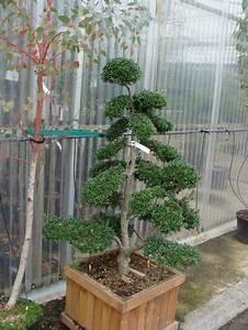 Arbre En Nuage : arbres en nuage ~ Melissatoandfro.com Idées de Décoration