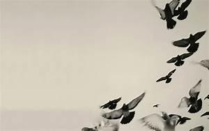 Black and White Bird Wallpaper - WallpaperSafari