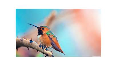 Birds 4k Wallpapers Desktop Ultra Backgrounds Mobile