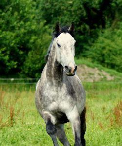 Pferd Magenprobleme Fütterung