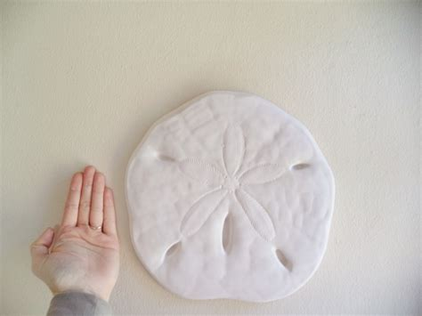 This sand dollar is bigger than anything you would ever find on the beach, and it is in one piece, unlike what i seem to find on the beach. Sand dollar wall hanging sculpture sea shell beach decor