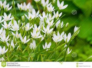 Blumen Im Garten : wei e blumen im garten stockfoto bild 54653927 ~ Bigdaddyawards.com Haus und Dekorationen